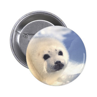 Seal Pup Face 2 Inch Round Button