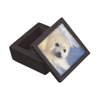 Seal Pup Face Jewelry Box