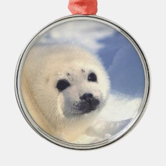 Seal Pup Face Metal Ornament