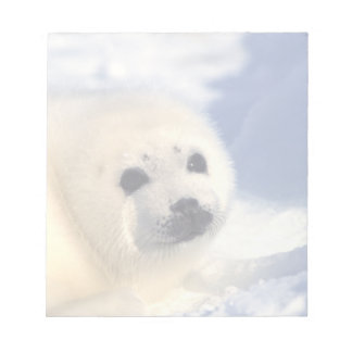 Seal Pup Face Memo Notepads