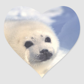 Seal Pup Face Sticker