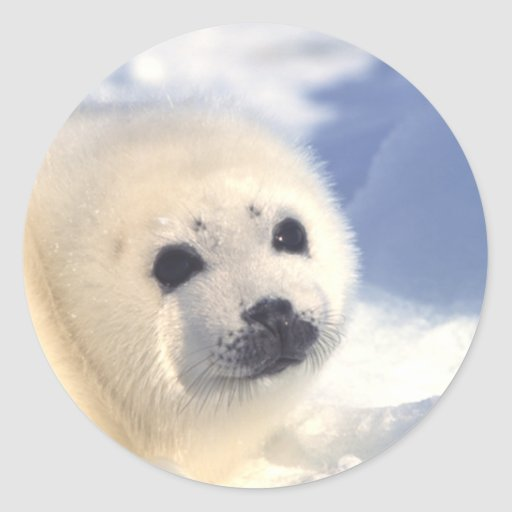 Seal Pup Face Round Stickers