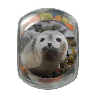 Seal Pup Glass Jar