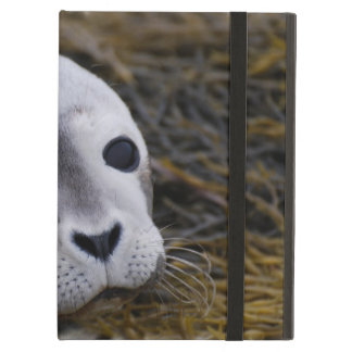 Seal Pup Case For iPad Air