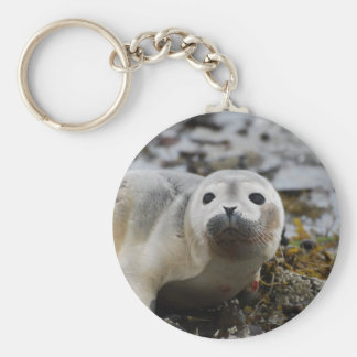 Seal Pup Keychain