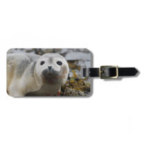 Seal Pup Luggage Tag