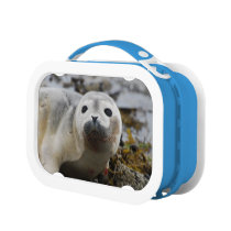 Seal Pup Lunch Box