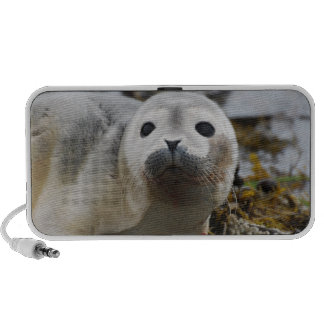 Seal Pup Portable Speakers