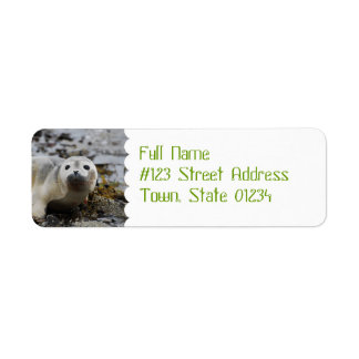 Seal Pup Return Address Mailing Label Return Address Label