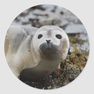Seal Pup Stickers