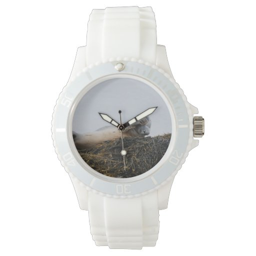 Seal Pup Wristwatches