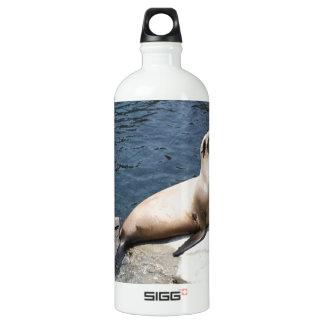 Seal Relaxing On A Rock Aluminum Water Bottle