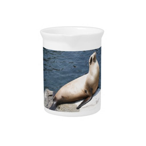 Seal Relaxing On A Rock Beverage Pitchers