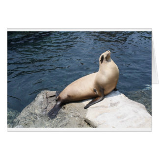 Seal Relaxing On A Rock Card