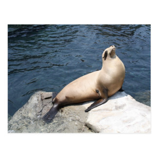 Seal Relaxing On A Rock Postcard