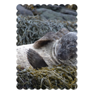 Seal Scratching an Itch 5x7 Paper Invitation Card