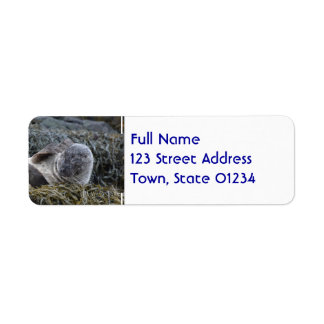 Seal Scratching an Itch Return Address Label