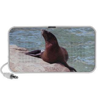 Seal Speaker