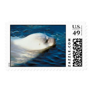 Seal Swimming Postage