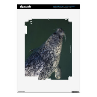 Seal swimming under the water 2 iPad 3 decal