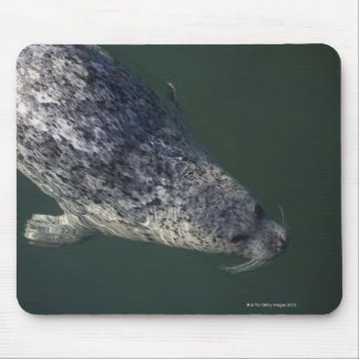 Seal swimming under the water 2 mouse pad