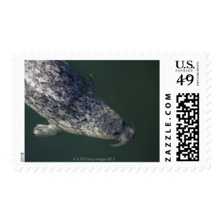 Seal swimming under the water 2 postage