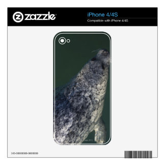 Seal swimming under the water 2 skins for the iPhone 4S