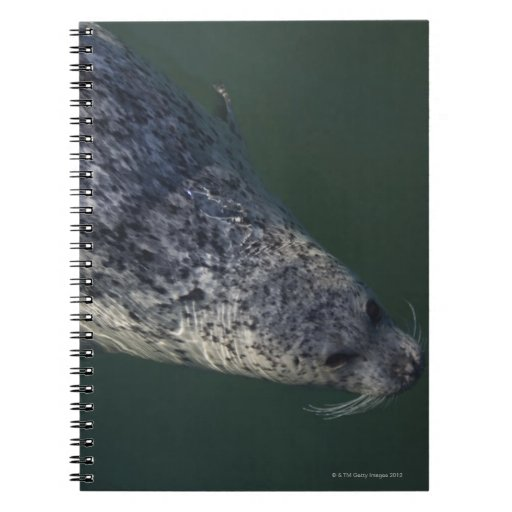 Seal swimming under the water 2 spiral note books