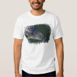 Seal swimming under the water 2 tees