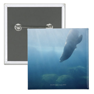 Seal swimming under the water pinback button