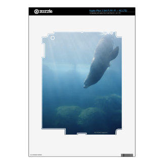 Seal swimming under the water iPad 3 decal