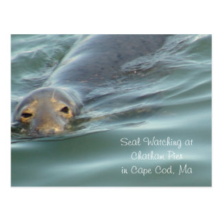 Seal Watching in Chatham Pier in Cape Cod Postcard
