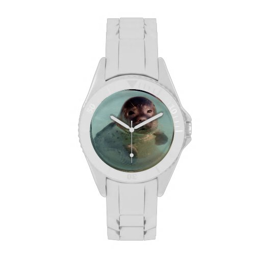 Seal Wrist Watches