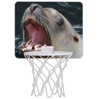 Sealion basketball hoop