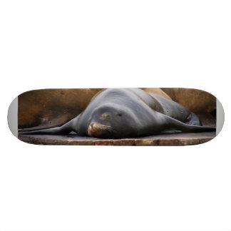 Sealions Sleeping On The Pier Skate Decks