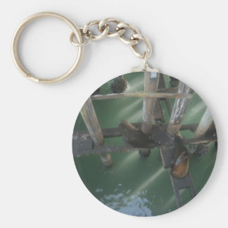 Seals a laying keychain