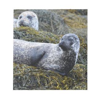 Seals in Seaweed Notepad