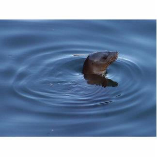Seals Lions Photo Cut Outs