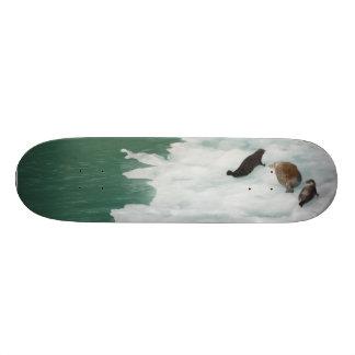 Seals on an Iceberg Skateboard