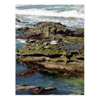 Seals On Rocks Water Postcard