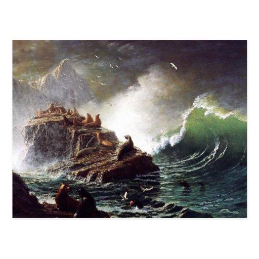 Seals on the Rocks, Farallon Islands - Bierstadt Postcard