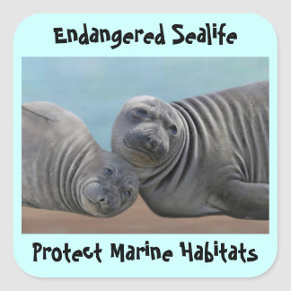 Seals on the sand square sticker