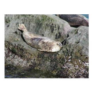 Seals Rock Barnicles Ocean Postcard