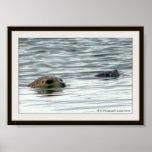 Seals swimming poster