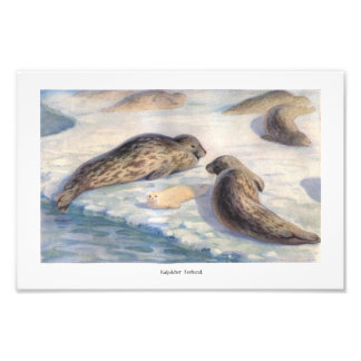 Seals with Pup illustration Photo Print
