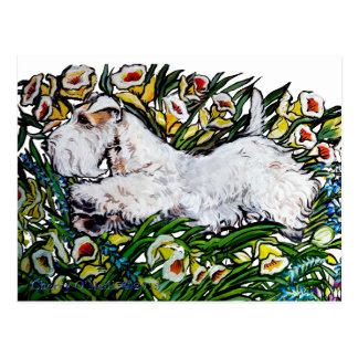 Sealyham Terrier Daffodils Post Card