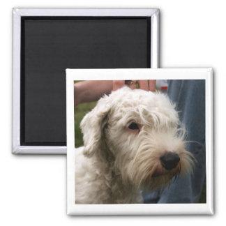 Sealyham_terrier.png Magnet