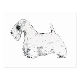 Sealyham Terrier Postcard