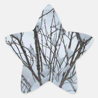 Seamless Icy Tree Bush Star Sticker