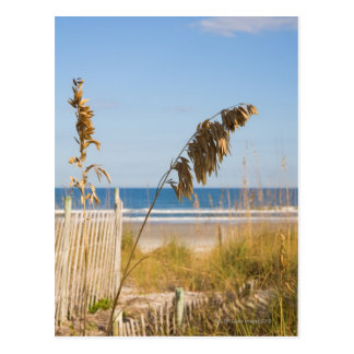 Seaoats (Uniola paniculata) and fencing for Postcard